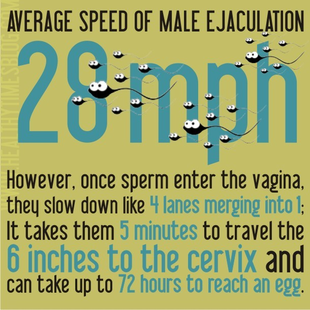 Fun Sex Facts 3